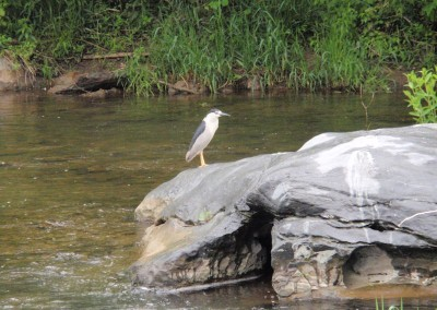 herron on creek