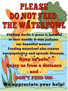 Please Do not Feed the Ducks